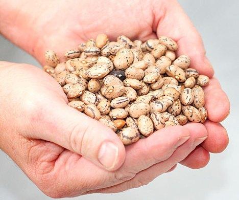 Rancho Gordo borlotti beans